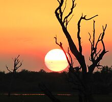 Sunset on the South Aligator River, Kakadu by Pauline Andrews