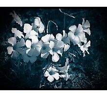 sour grass Photographic Print