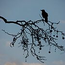 Crow Silhouette by duncandragon