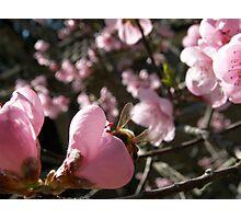 Snuggle bee Photographic Print