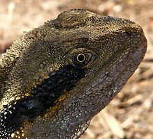 Male Water Dragon - Portrait by stevealder