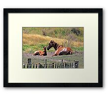 """Mare & Foal ....."" Framed Print"