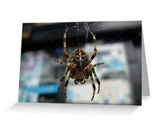 Garden Spider Greeting Card