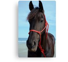Friesian at the beach Canvas Print