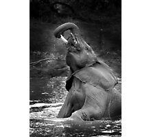 Elephant bath time Photographic Print