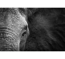 Elephant beauty Photographic Print