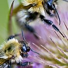 Bumble Bees by Moonlake