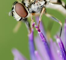 Hoverfly by Moonlake