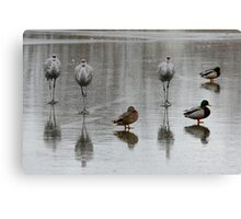Sandhill Cranes On Ice, With Some Mallards Canvas Print