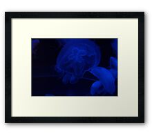 Blue Jellyfish Drifting Peacefully in the Darkness Framed Print