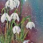 Snowy snowdrops by Ann Mortimer