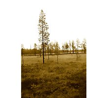 My beloved forrest Photographic Print