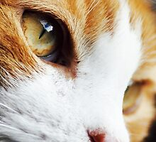 Cats Eye by paws4life