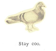 Stay Coo Vintage Pigeon by bluespecsstudio