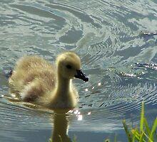 Just Ducky! by Karen Phillips