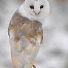 Winter Barn Owl by barnowlcentre