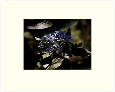 Adding some BLUE to life by Judi Taylor