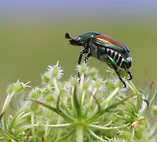 Beetle On Top Of The World by Gene Walls
