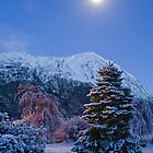 Walking in a Winter Wonderland..... by Caroline  Freeman