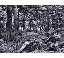 Avalanche Creek Trail Photographic Print