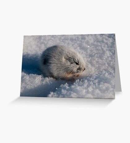An Arctic Lemming in the Spring Greeting Card