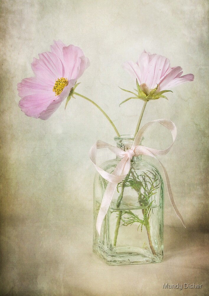 Cosmos Calm by Mandy Disher