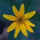 Square Flower 1 by Allen Lucas