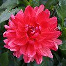 Square Flower 4 by Allen Lucas