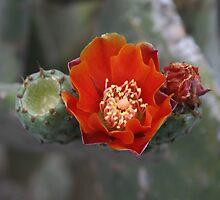 Square Flower 6 by Allen Lucas