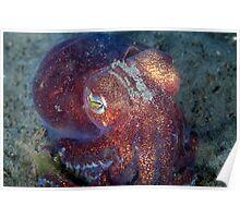Stubby Squid Poster