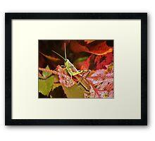 Beautiful Grass Hopper Framed Print