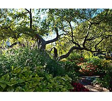 Arms Reaching Up and Out! Photographic Print