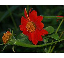 Orange! Photographic Print