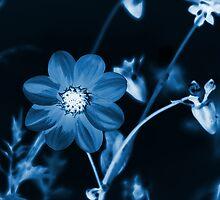 Midnight Glow by Kathleen Struckle