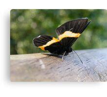 Iguazu insects Canvas Print
