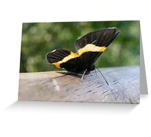 Iguazu insects Greeting Card