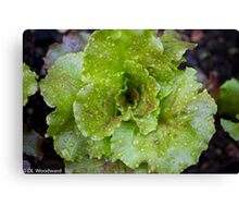 Baby Greens Canvas Print