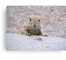 """Please feed me"" Ground squirrel  Canvas Print"