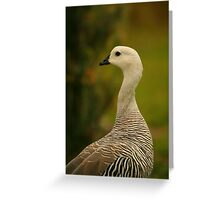 Upland Goose Greeting Card