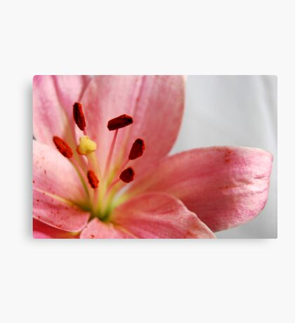 Sarahs Favorite Canvas Print