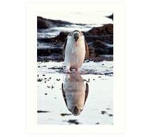 Downcast Penguin - New Zealand Art Print