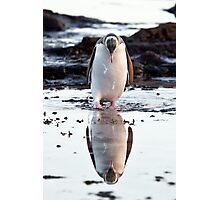Downcast Penguin - New Zealand Photographic Print