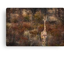 Can't tell the forest from the giraffe Canvas Print