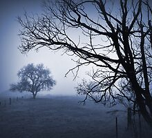 Foggy Blue Morning by Barb Leopold