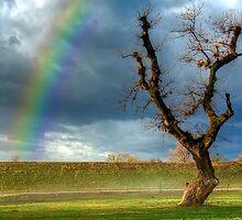 Rainbow and Tree by Boris Frkovic