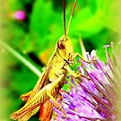 Grasshopper on common teasle by ©The Creative  Minds