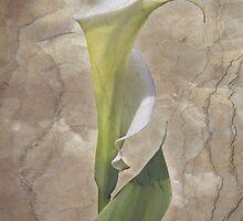 G R A C E  by Wendi Donaldson Laird