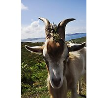 Billy theGoat Photographic Print