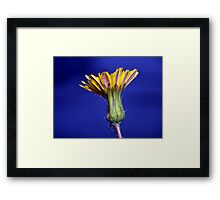 ©NS The Beauty And The Bug IA. Framed Print