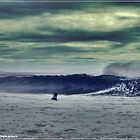 Surf's up  by stevekellyphoto